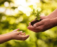 hands handing plant to child